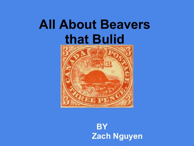All about Beavers That Build