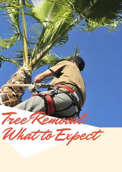 Tree Removal: What to Expect