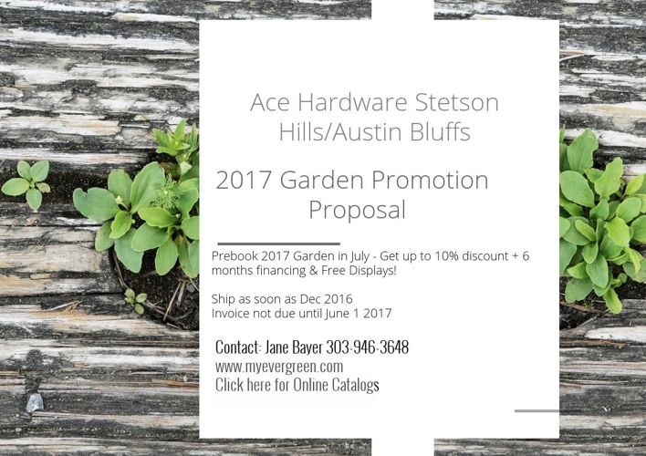 Z Ace Hardware Stetson Hills Proposal