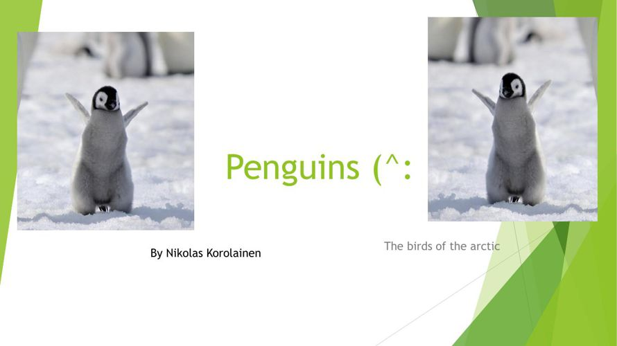 Penguins By Nik