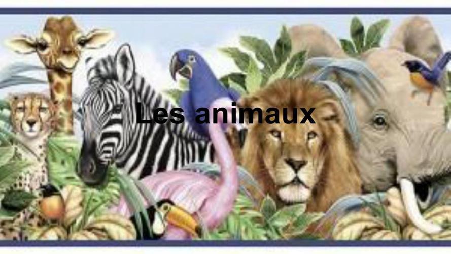 french prestentation