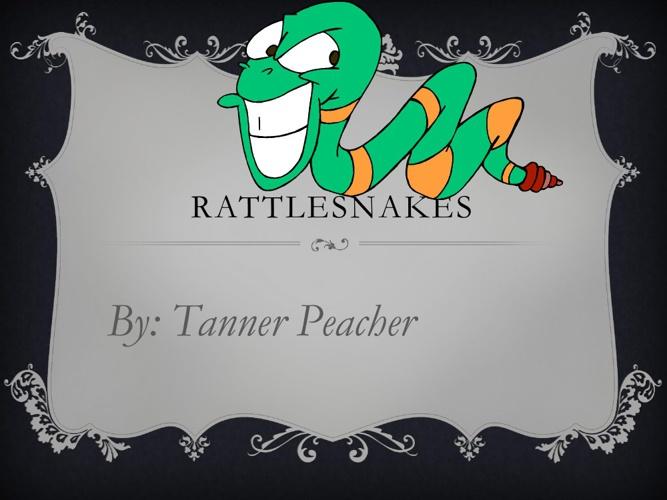 Tanner rattlesnakes