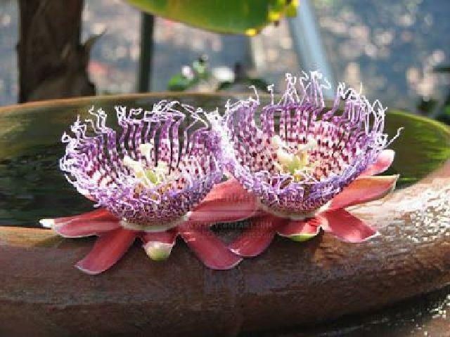 Flip Hoa đẹp nhất