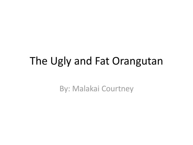 The Ugly and Fat Orangutan