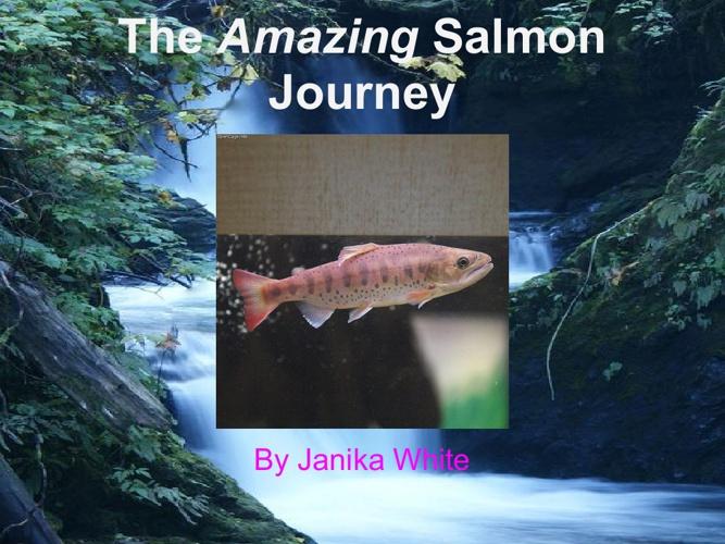 The Amazing Salmon Journey