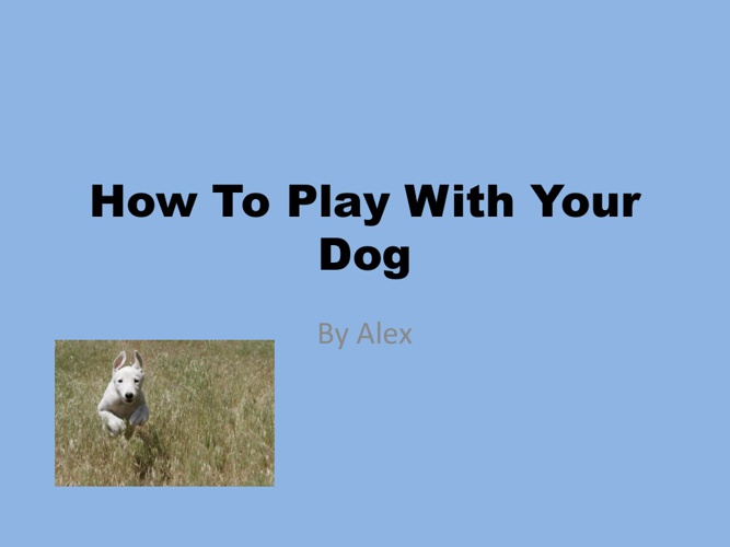 How To Play With A Dog