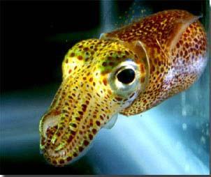 Aliivibrio fischeri