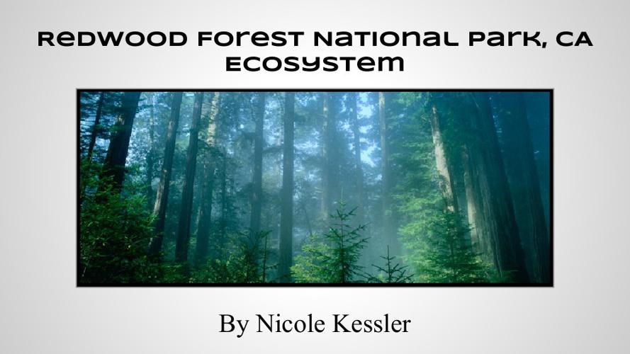 Redwood Forest Ecosystem Presentation