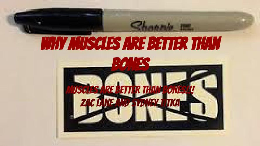 Why Muscles Are Better Than Skeletons Argumentive Project