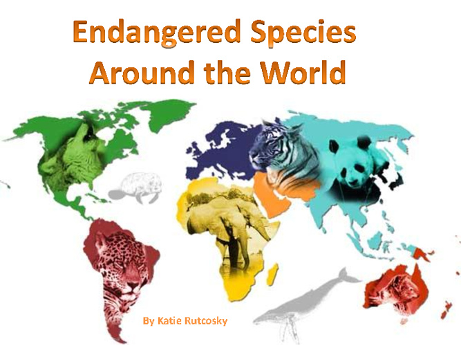 Endangered Species Around the World