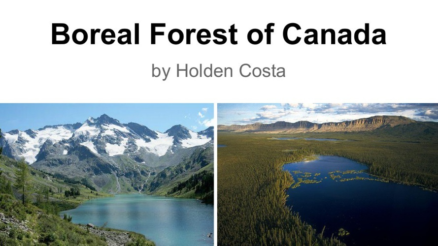 Boreal Forest of Canadia
