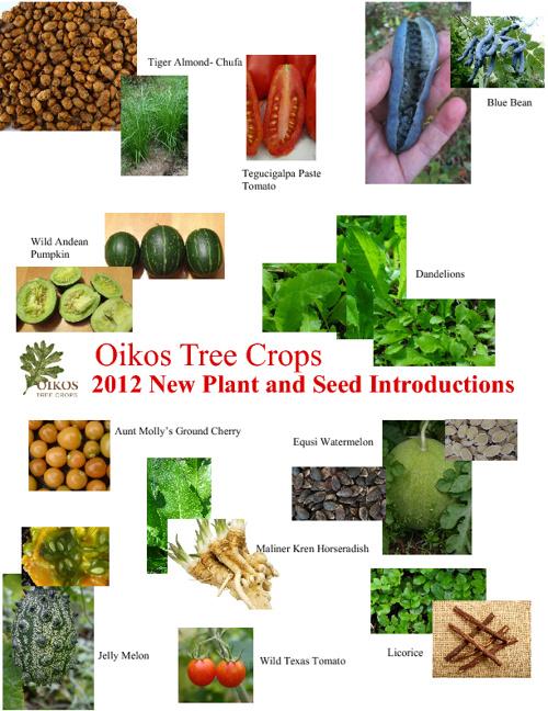 Oikos - New Plants Summer 2012