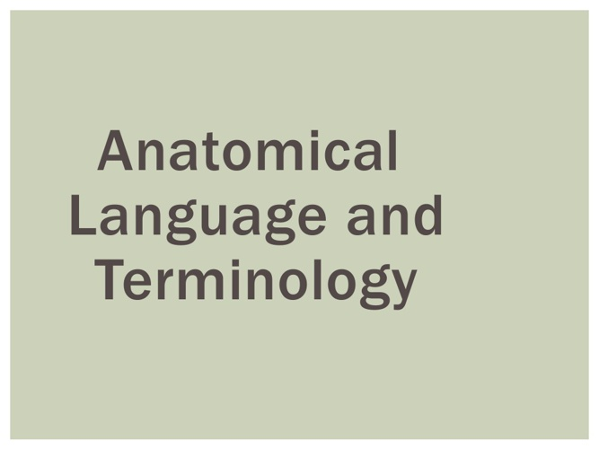 Anatomical Terminology + Muscle Contractions