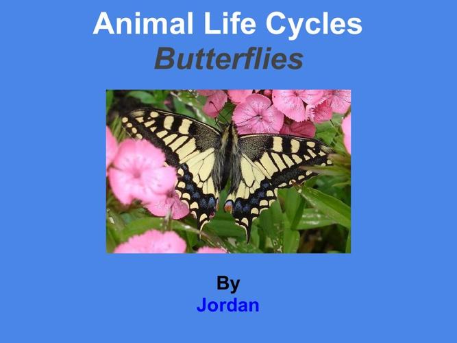 jordan butterfly