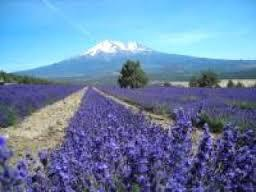Mt Shasta 4