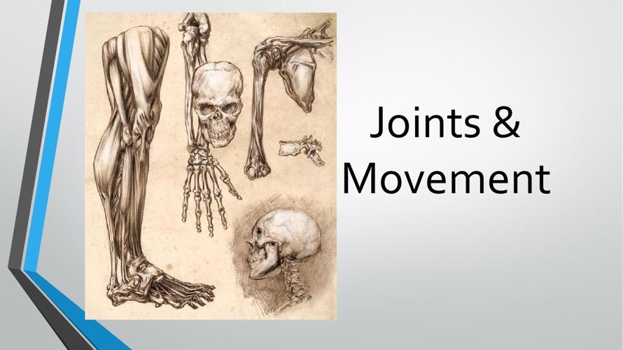 Joints & Movement