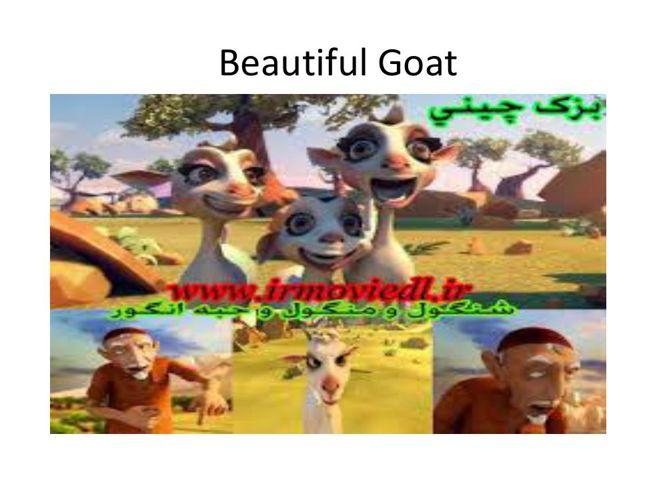 Beautiful Goat