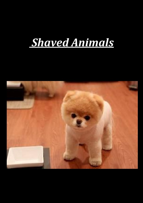 Shaved_Animals