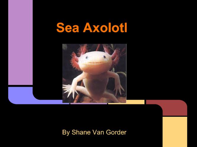Axolotl Project- RTI