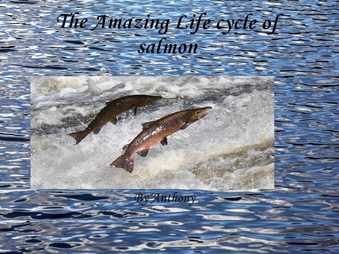 The amazing life cycle of salmon