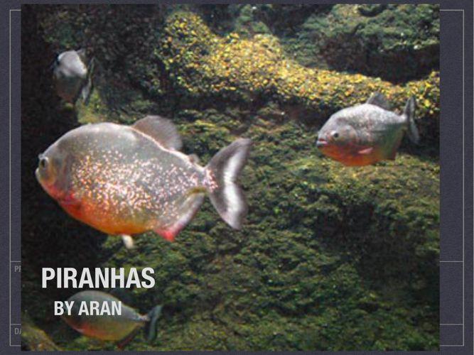 PIranahs