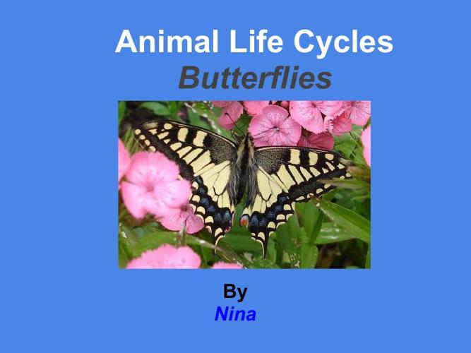 Nina Butterfly
