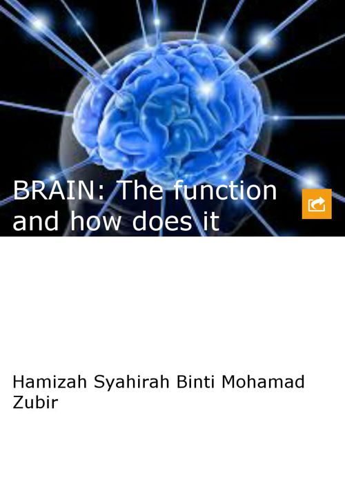 BRAIN: The function and how does it works
