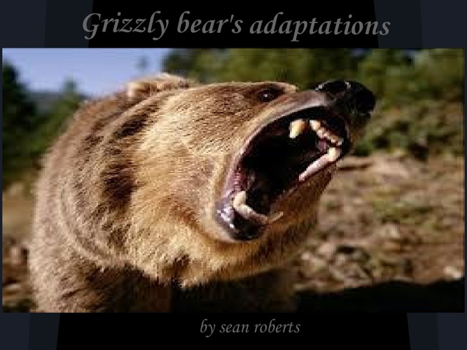 The  Grizzly Bear Adaptations