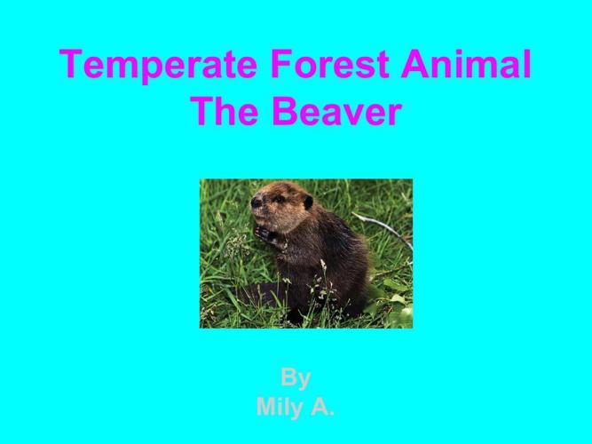 Milybeaver-3