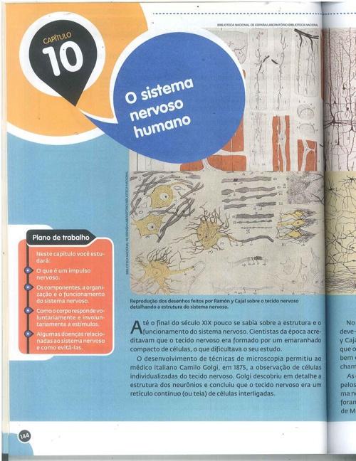 Copy of Sistema nervoso humano