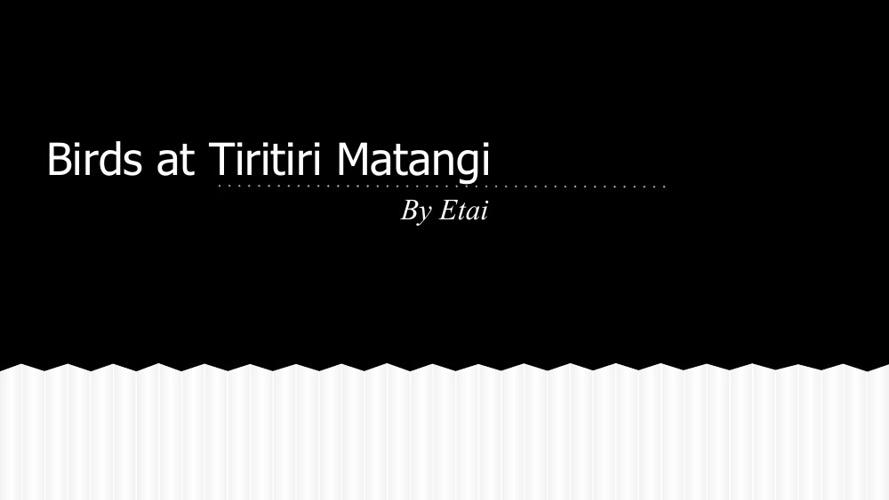 Birds at Tiritiri Matangi