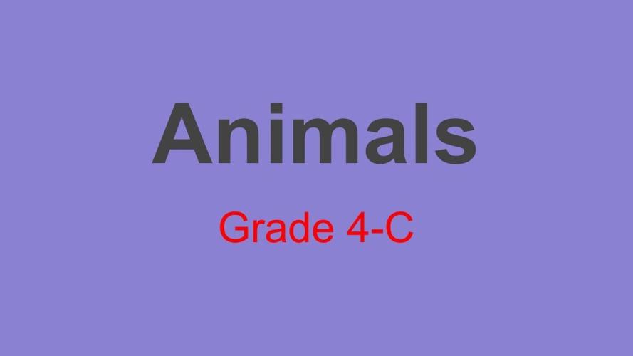 Animals Book (Grade 4-C)