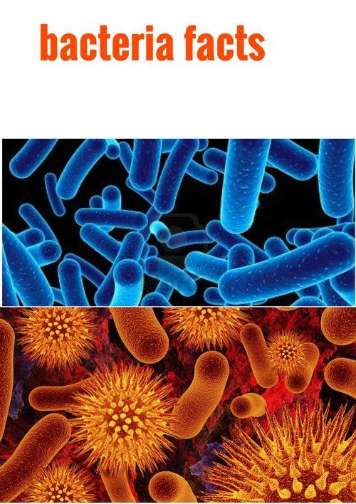 Bacteria 101