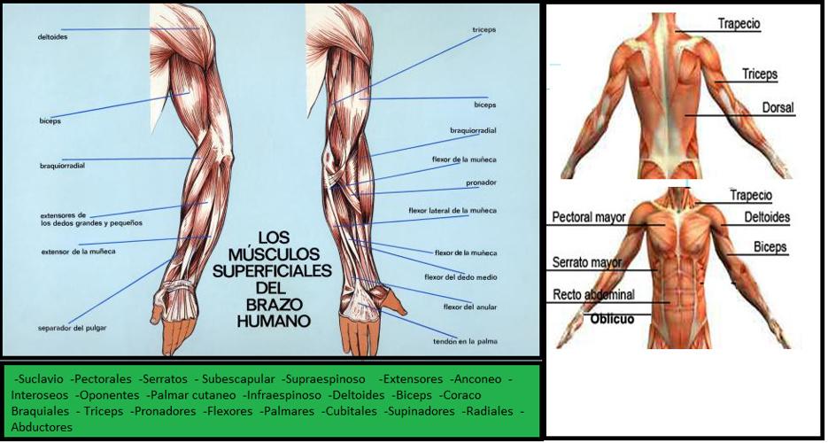 Cartilla de ejercicios de fortalecimiento de actividad fisica.