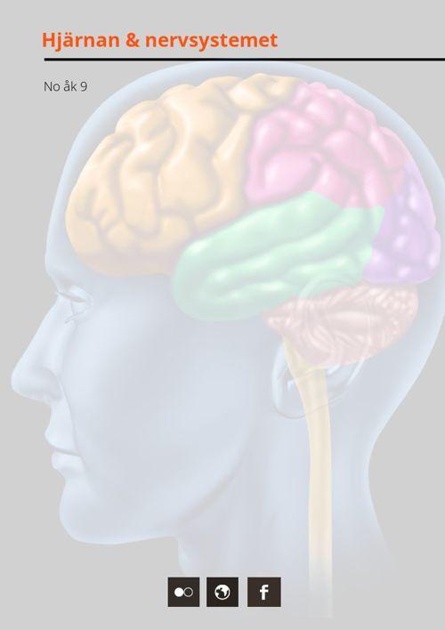 Hjärnan och nervsystemet åk 9