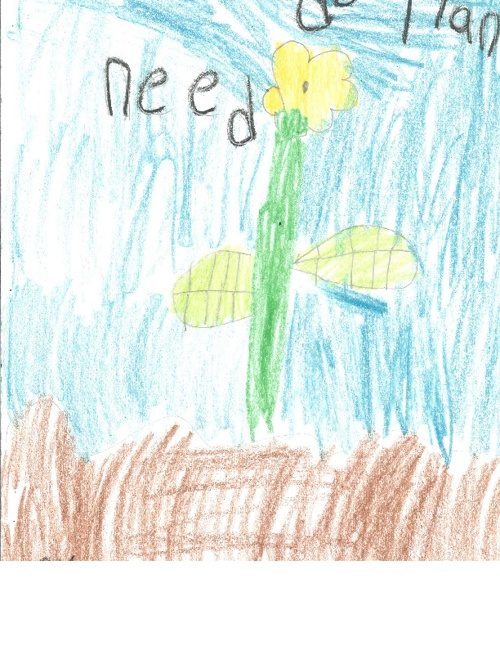 What do Plants Need? SA