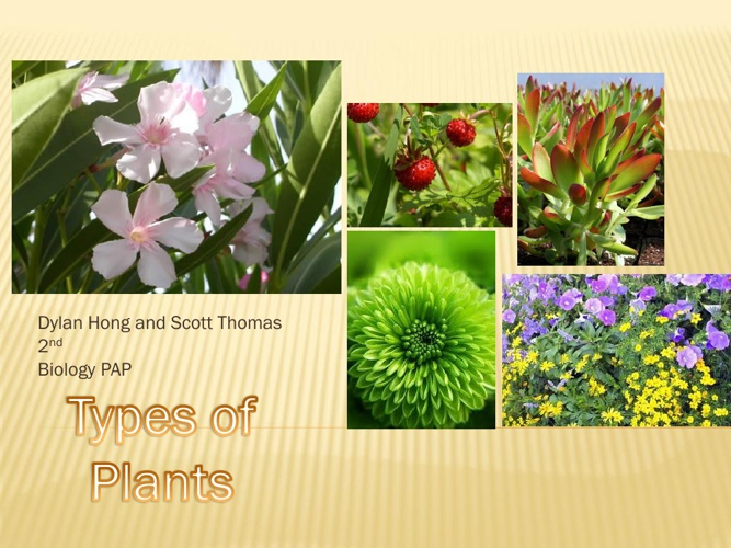 The Different Types of plants