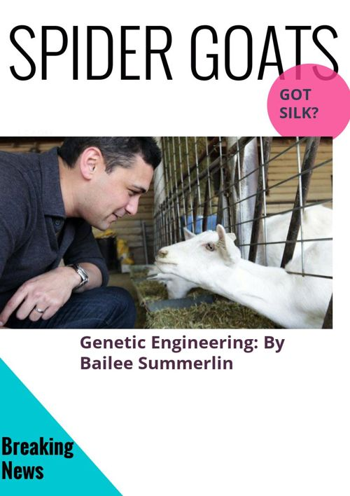 spider goats