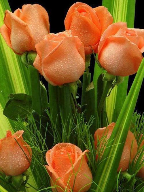 ჩემი საყვარელი ყვავილები
