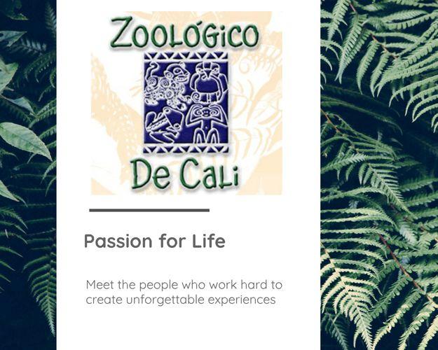 Cali Zoo -English