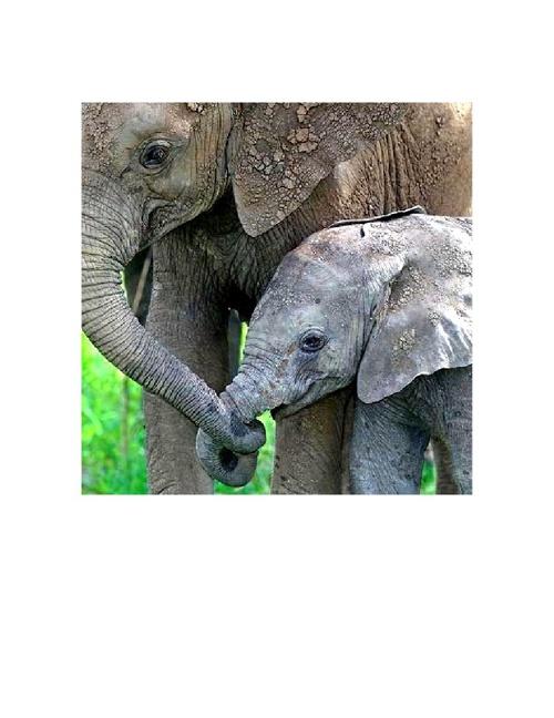 Elephant Shared Reading