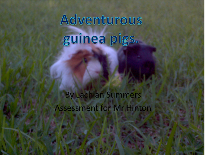 adventurous guinea pigs