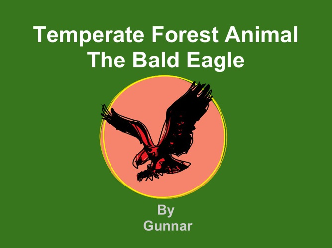 Gunnar bald eagle