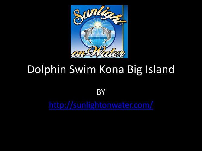 Dolphin Swim Kona Big Island
