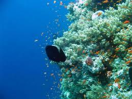 coral reef_1