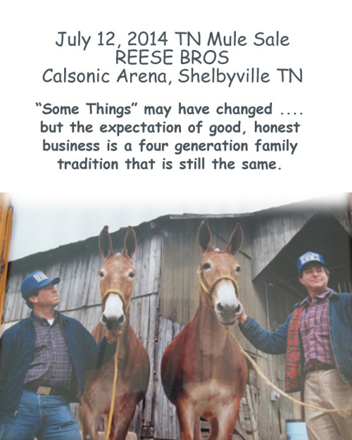 July 2014 Reese Mule Sale
