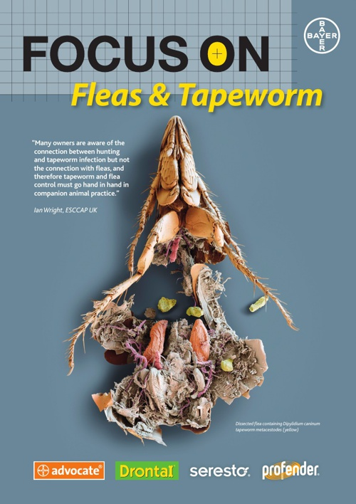Focus on Fleas and Tapeworm