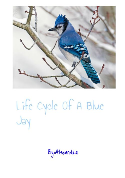 Life Cycle of a Blue Jay
