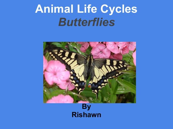 Rishawn Butterflies