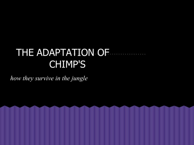 The adaptations of the CHIMPANZEES